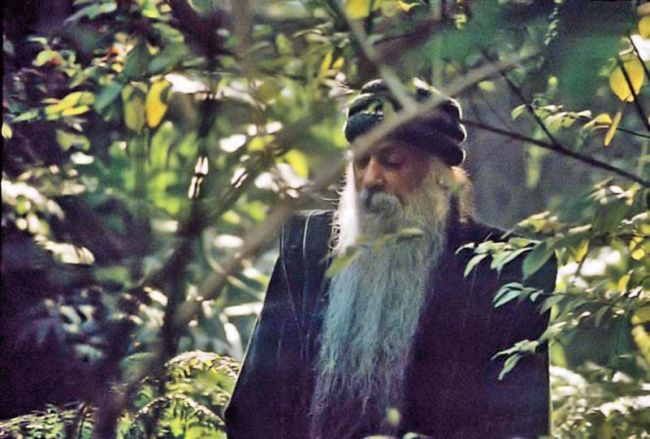 osho in leaves